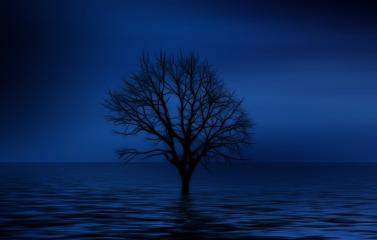 tree-738816_640.jpg