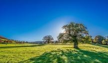 autumn-sunshine-2916763_640