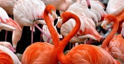 flamingo-3309628_640